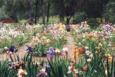 Deciding To Share Our Joy Of Both Gardening And Iris With Others, We Opened  To The Public In 1999. We Work Along Side With Our Children And Their  Families ...